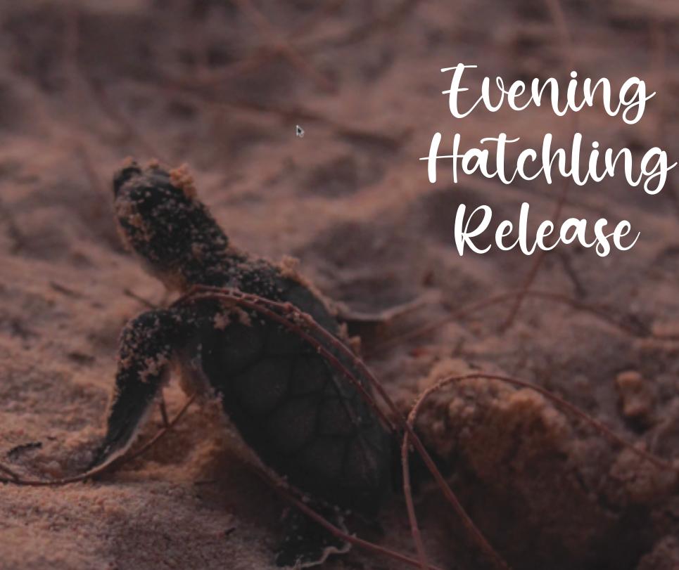Turtle Release, Seven Mile Beach